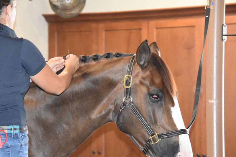 Learn to braid your horse's mane.