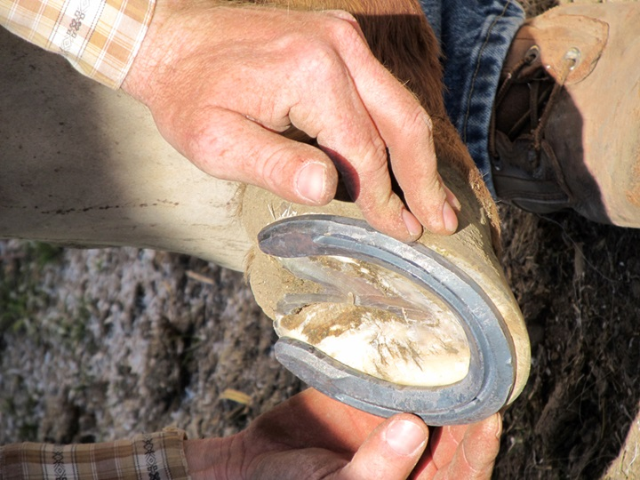 Learn a brief history of horseshoes.