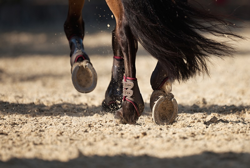 Horse running in arena