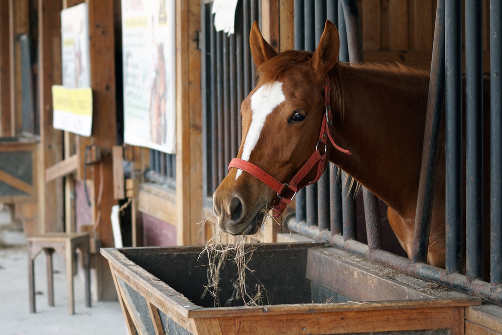 Feeding Your Performance Horse