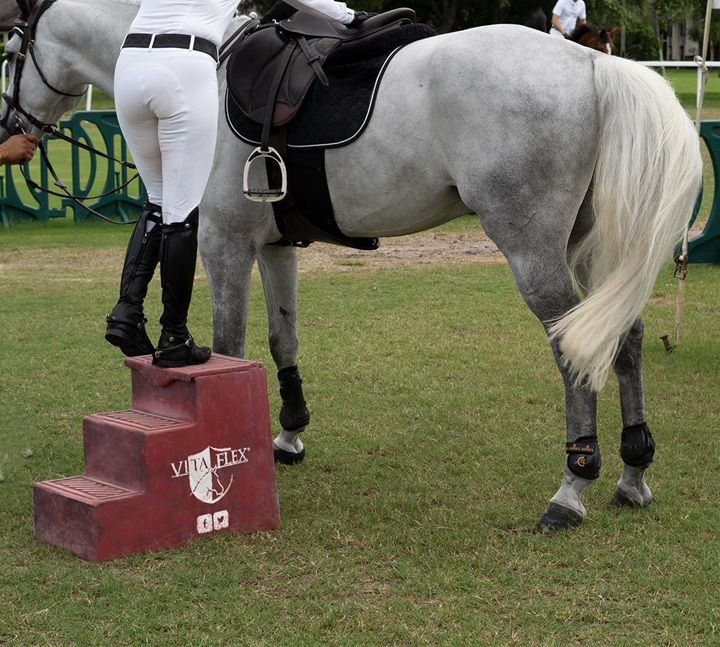 Rider teaching horse to stand still while mounting.