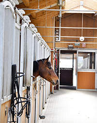 Is the Barn Air Quality Hurting My Horse? How to Improve It | Vita Flex