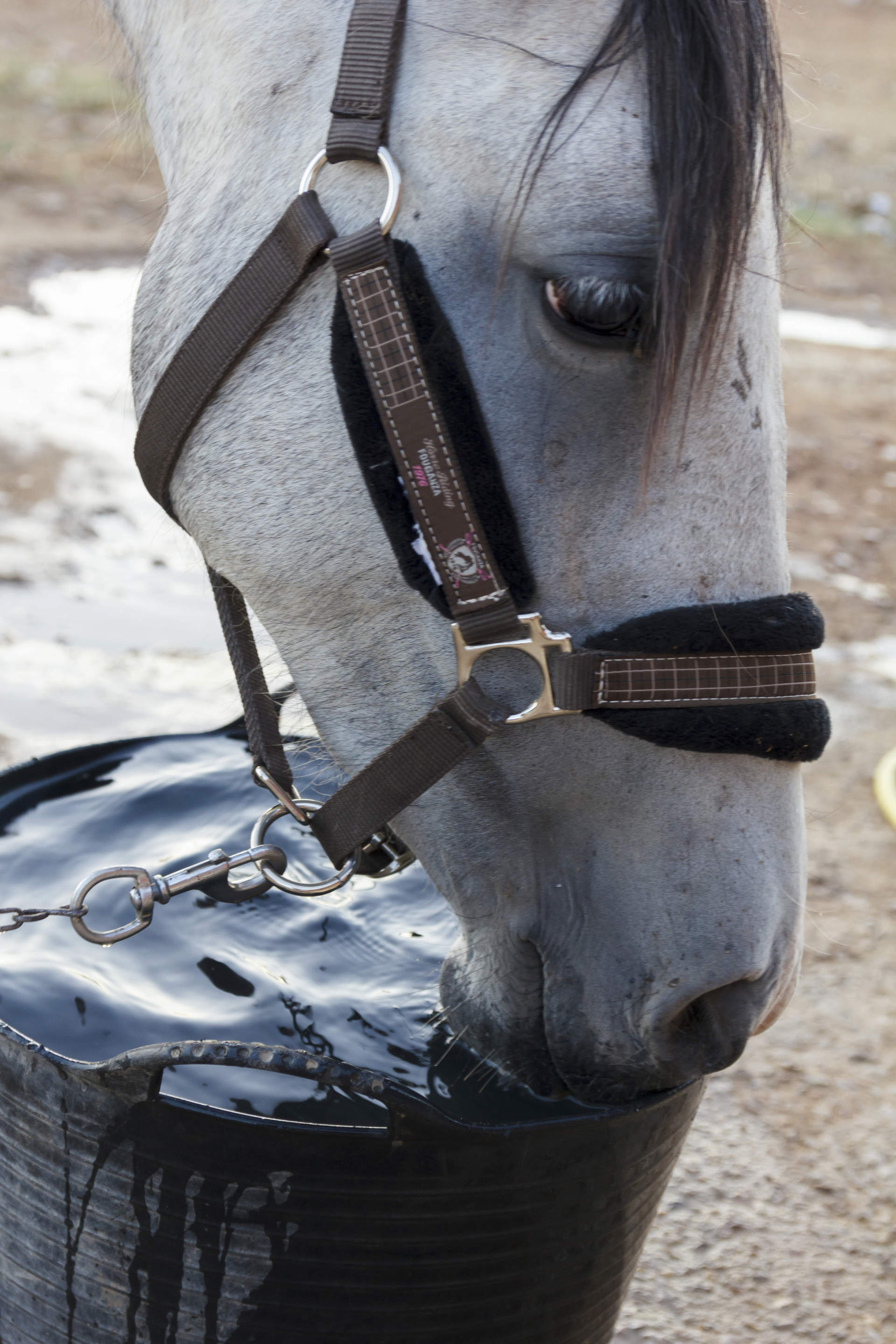 How Much Water Should My Horse Drink During Winter? | Vita Flex