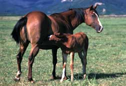 Horse and baby horse