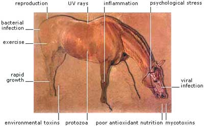 Oxidative Stress in Horses